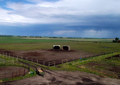 gelding_pasture_strathmore_Calgary